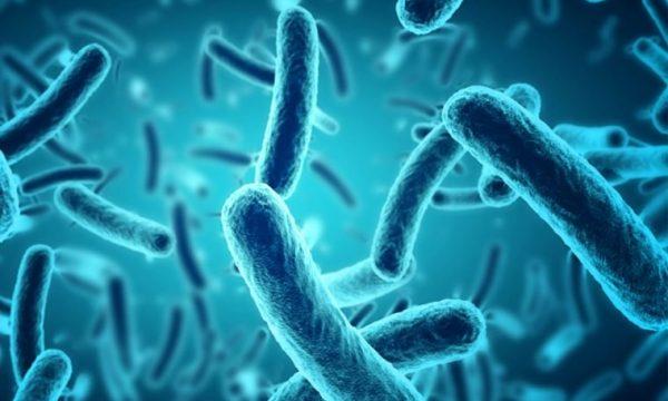 Përdorimi i dy llojeve të antibiotikëve e nxit rezistencën e bakterit