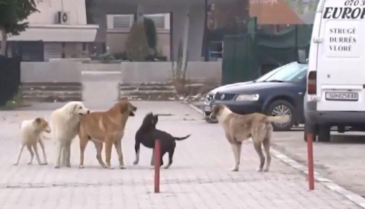 Sulmohet nga një qen , lëndohet rëndë