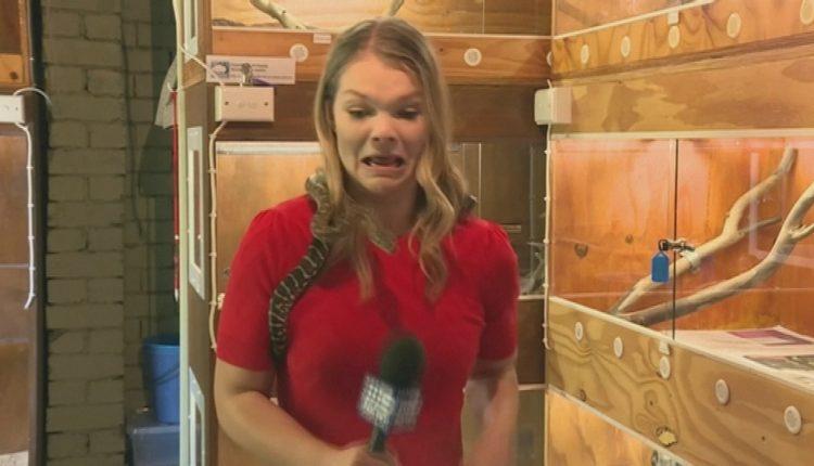 Pitoni i kafshon mikrofonin gazetares, kameramani filmon momentet e frikës (VIDEO)