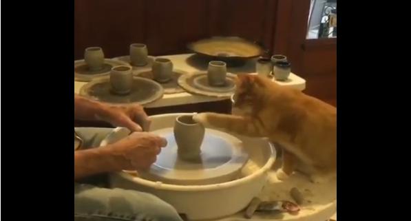 Macja ndihmon pronarin të prodhojë qeramikë (VIDEO)