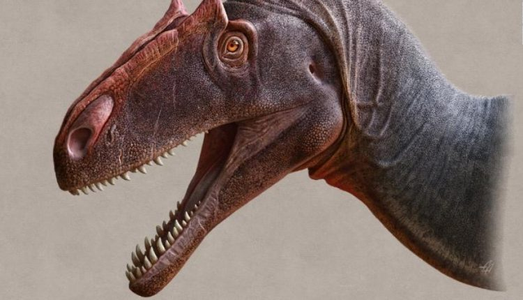 Fshatari kanadez zbulon fosilet e dinozaurit
