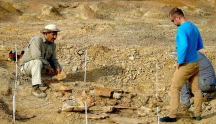SHBA, zbulohen fosile breshke sa një makinë