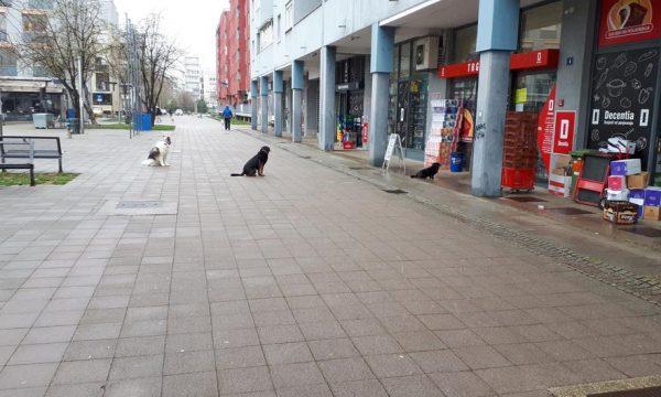 Interesante, qentë po 'mbajnë' distancën sociale në kohë pandemie