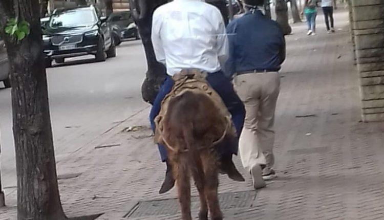 Në mungesë të lejes së qarkullimit me veturë, qytetari doli me gomar nëpër qytet (FOTO)