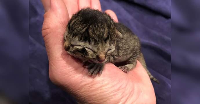 Një mace lind me dy fytyra në Amerikë (VIDEO)
