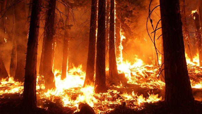 SPB Tetovë apelon: Kujdes me zjarret