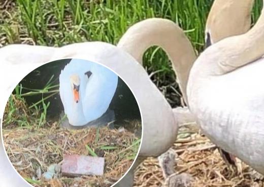 Disa djem i thyen vezët me tulla, mjellma nënë ngordh nga trishtimi