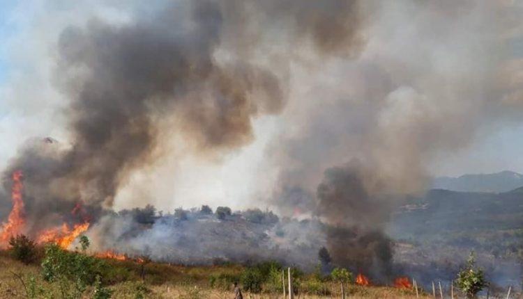 Zjarr në Liqenin e Tikveshit, përfshihet edhe pyll me pisha