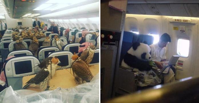 Çmenduria e princit saudit, paguan biletat e aeropoanit për 80 zogjtë