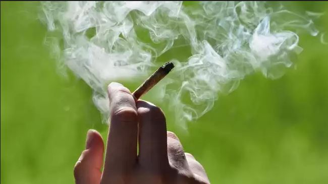 Tetovë: Arrestohet një person për marihuanë