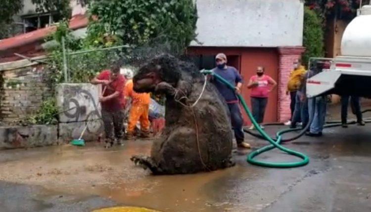 VIDEO/ Një 'mi gjigant' gjendet në Meksikë