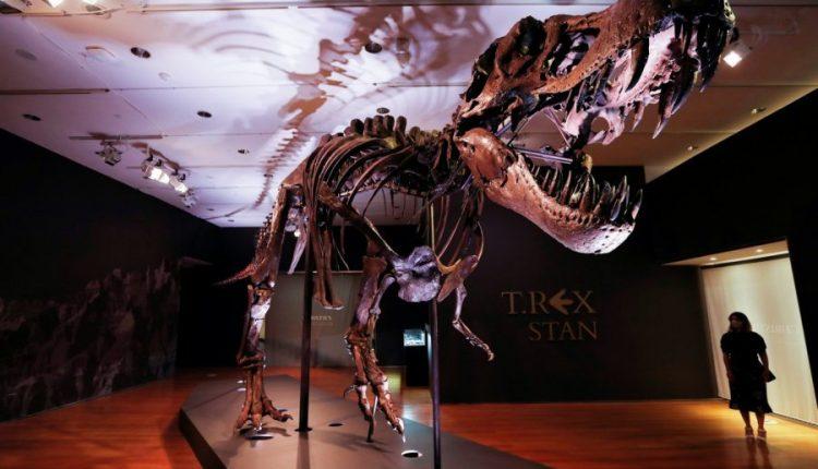 Del në shitje skeleti i një tiranosauri 67 milion vjeçar