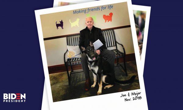 Joe Biden kërkon ndihmë mjekësore, përdrodhi kyçin e këmbës duke luajtur me qenin e tij