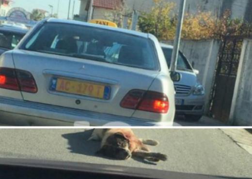 U fotografua duke tërhequr qenin zvarrë, flet shoferi i taksisë