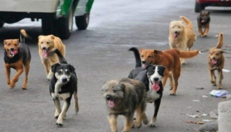 Bërvenicë: Sulmohet nga qeni i një bashkëfshatari