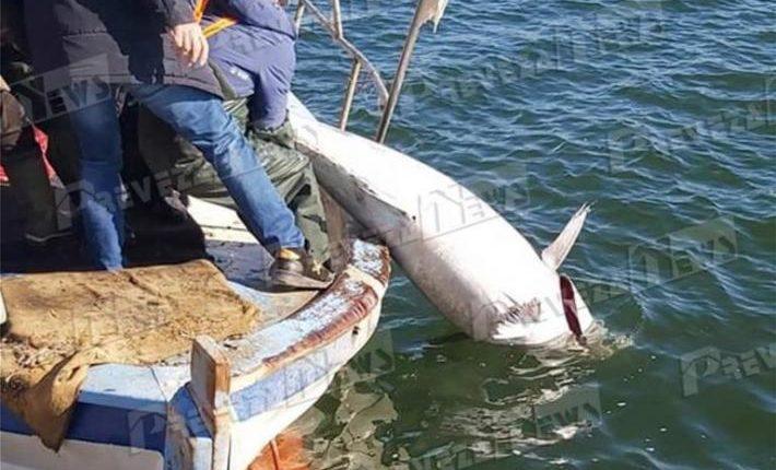 Ngjarje e rrallë në Çamëri, kapet peshku ton 130 kilogram (FOTO LAJM)