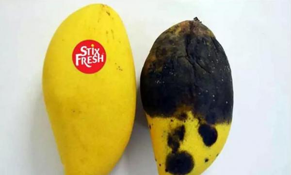 Kompania amerikane e teknologjisë së lartë: Një pullë që shmang kalbjen e frutave dhe perimeve