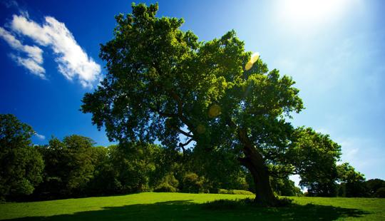 Moti sot do të jetë kryesisht me diell, temperatura deri në 33 gradë Celsius