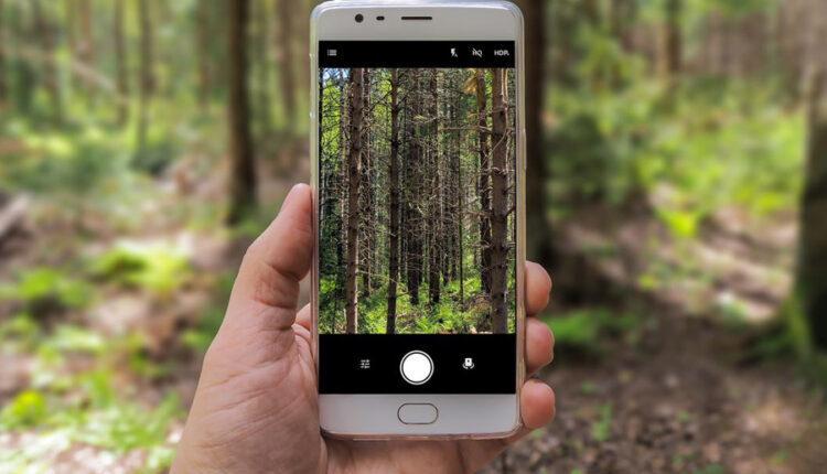 Teknologjia po shpëton jetën e miliona pemëve nëpër botë