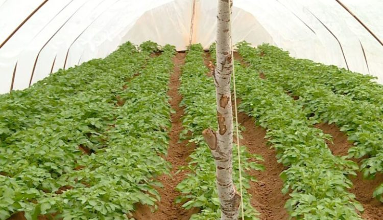 Nutricionistët alarmojnë për rrezikun nga përdorimi i pesticideve te frutat dhe perimet