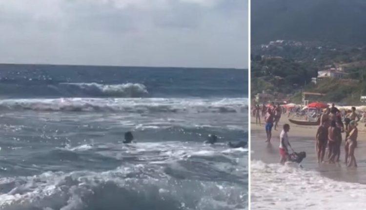 Po mbytej në det, 2 qen shpëtojnë 15-vjeçaren (VIDEO)