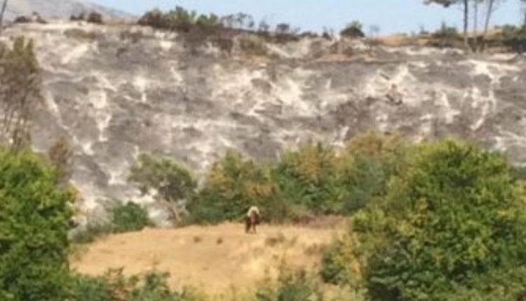 Zjarrfikësit prej disa orësh në luftë me flakët, shuhen vatrat e zjarrit në Kutal të Përmetit, digjen 10 ha pyje (VIDEO)