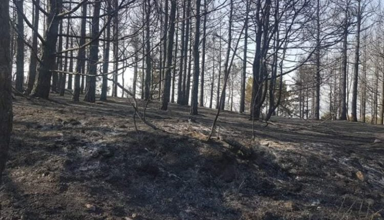 Shuhet zjarri në fshatin Srbjani, rajoni i Kërçovës