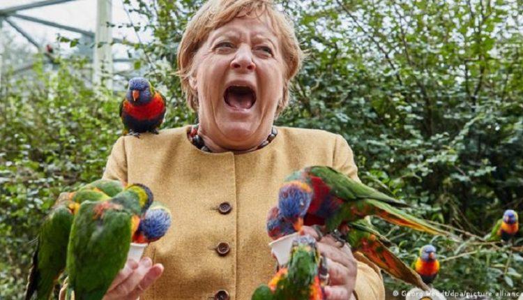 Angela Merkel viziton një park shpendësh, papagajtë 'e sulmojnë', nuk duhet t'i humbisni fotot e kancelares