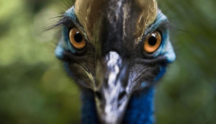 Zogu më vrasës në botë është rritur nga njerëzit 18,000 vjet më parë